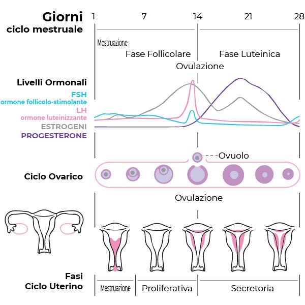 tutte le fasi del ciclo mestruale